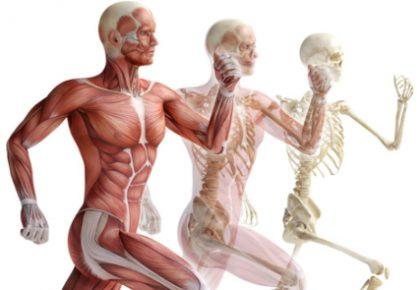 Miofascialinė – skeletinė terapija
