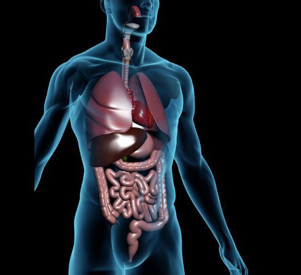 Darbas su kūno organais ir sistemomis